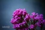 Pavement flower